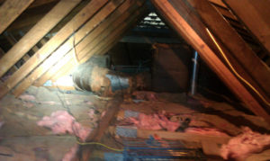 Raccoon Problem in Attic