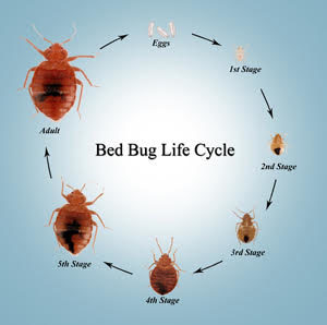 Bed Bugs Have Just Been Found On Business Class You Should Be Afraid