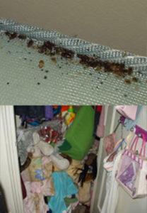 bedbugs-example