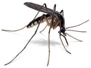mosquito Control Services Broken Arrow, Tulsa, Jenks, Bixby, Coweta, Oklahoma