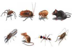 Pest Control Services Broken Arrow, Jenks, Bixby, Coweta, Tulsa, Oklahoma