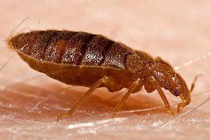 EnviroTech Exterminating, Guaranteed Bed Bug Heat Treatment, Bed Bug